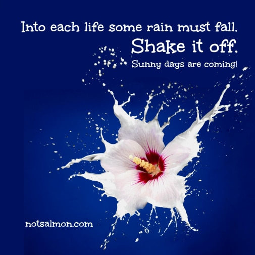 poster flower shake off splash med