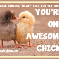 salmansohn awesome chick MED