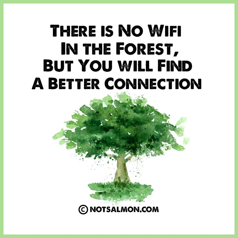 poster wifi forest connection