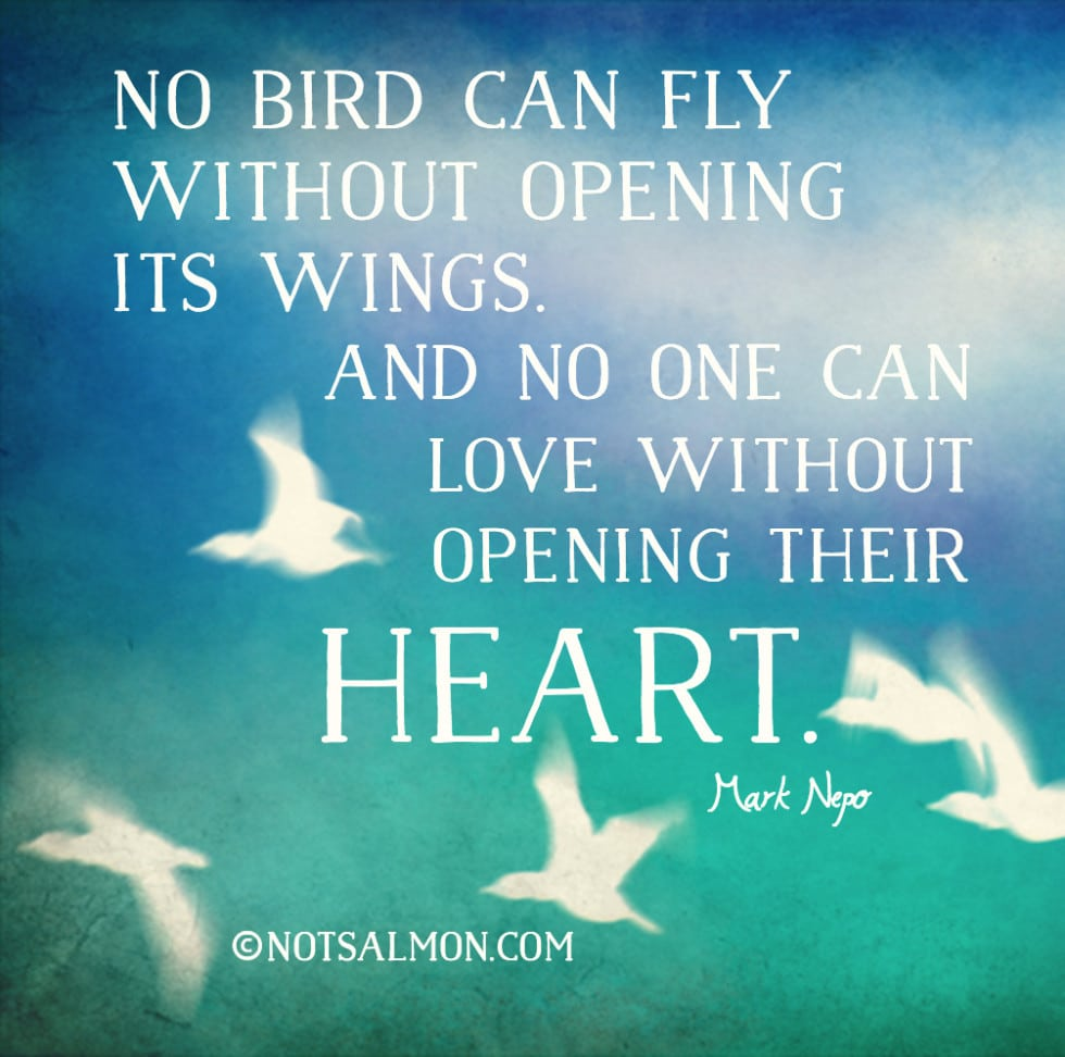 no bird can fly without opening its wings