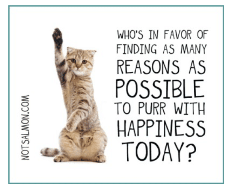 reasons to purr with happiness humorous quote