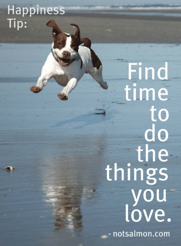 dog quote about happiness in life