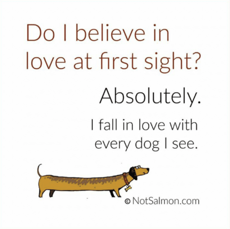 love at first sight with a dog quote funny