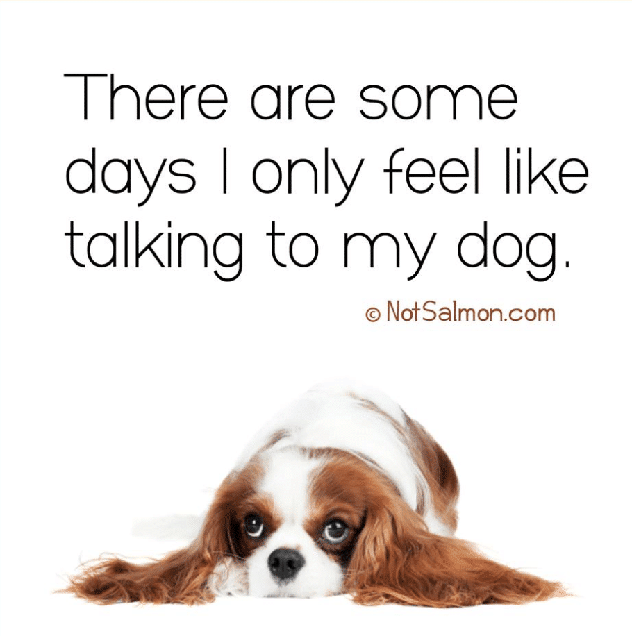 Funny Dog Quote