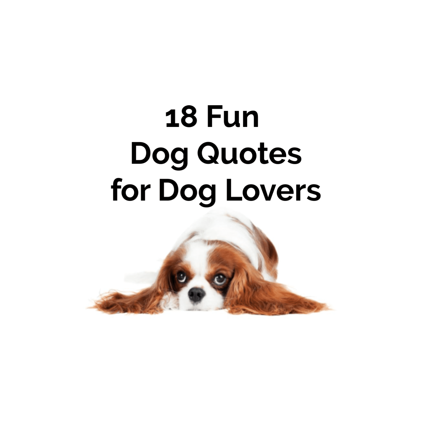 18 Fun Dog Quotes and Puppy Quotes for Dog And Puppy Lovers