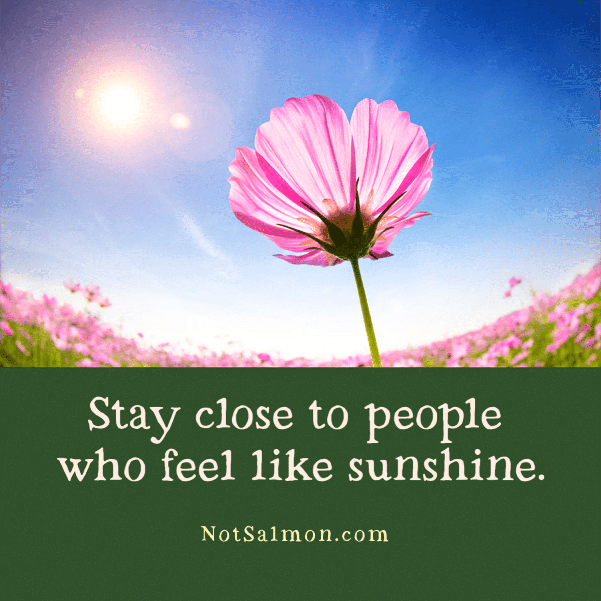 Stay Close To People Who Feel Like Sunshine Quote Reminder