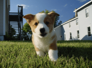 Life Lessons We Can Learn From Our Dogs