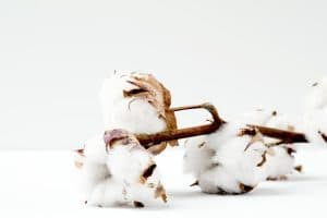 5 Amazing Benefits Of Cotton You Probably Didn't Know